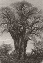 PERU. Lima and the Andes. The Baobab 1880 old antique vintage print picture